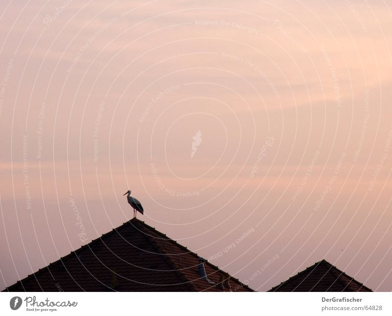 Lonesome Stork Loneliness Twilight Bird Roof Gable Back-light Offspring Calm Far-off places Longing Evening Morning Pyramid Sky Dusk Silhouette Free Peaceful