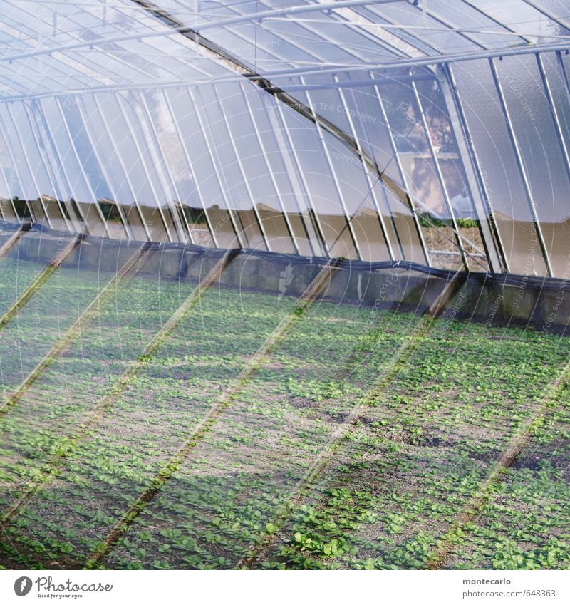 glass house Environment Nature Plant Sun Sunlight Spring Leaf Foliage plant Agricultural crop Window Roof Greenhouse Glass Metal Illuminate Growth Thin