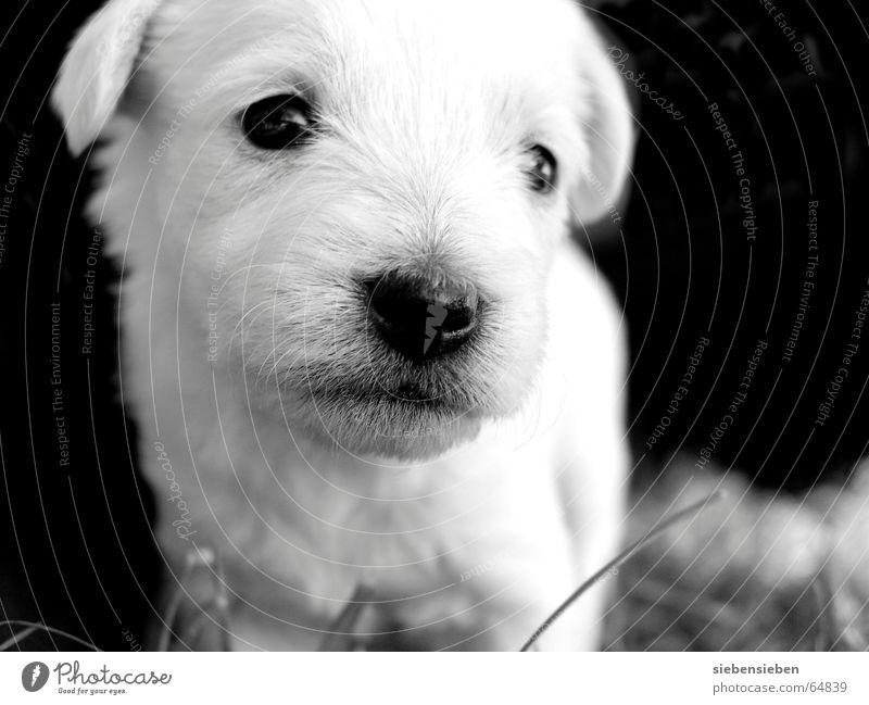 Human being Nature Animal Black Eyes Dog Small Baby animal Soft Pelt Living thing Mammal Pet Offspring Puppy