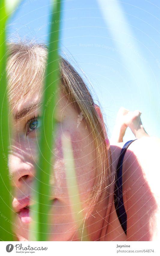 Sun Green Blue Summer Grass