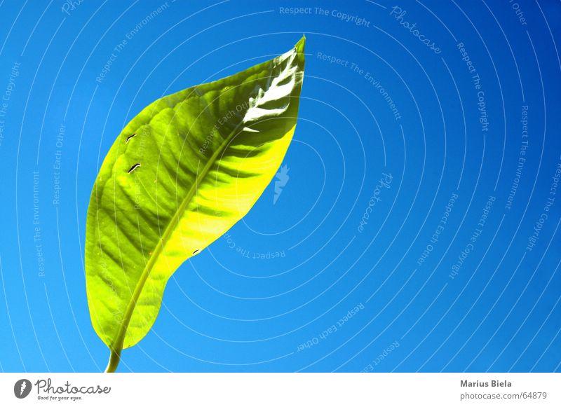 Sky Green Blue Summer Joy Calm Leaf Warmth Physics Serene Beautiful weather Irradiated