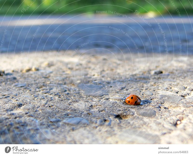 Lonely Happiness Ladybird Good luck charm Loneliness Small Graceful Asphalt Concrete Punctual Insect Point lucky symbol hurtful Street positive
