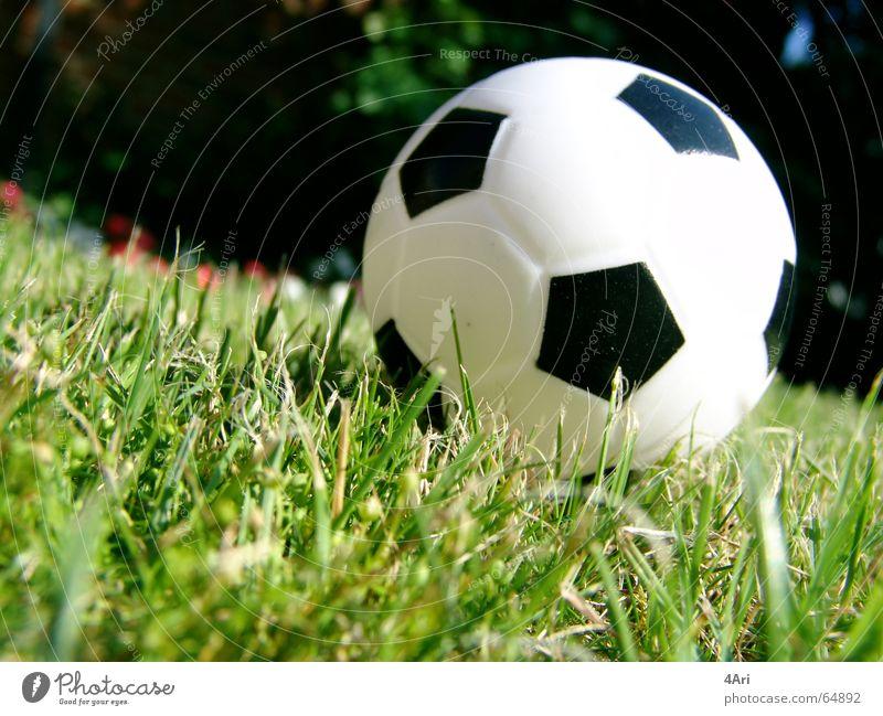 Meadow Grass Soccer Ball Lawn Gate
