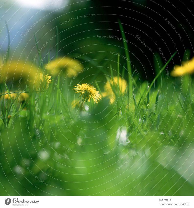 Sky Nature Blue Green Plant Flower Black Yellow Dark Meadow Spring Grass Blossom Dream Bright Wild animal