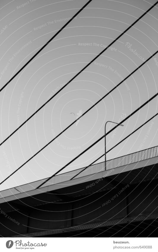 Sky City Animal Street Line Metal Bird Transport Large Bridge Stripe Logistics Street lighting Cloudless sky Under Highway