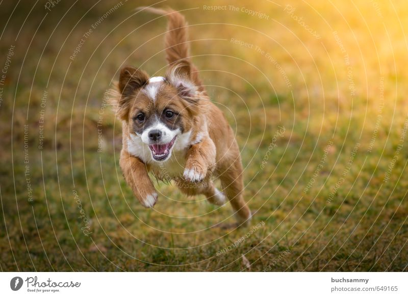 Dog Green White Joy Animal Yellow Baby animal Life Autumn Grass Small Happy Jump Flying Orange Speed
