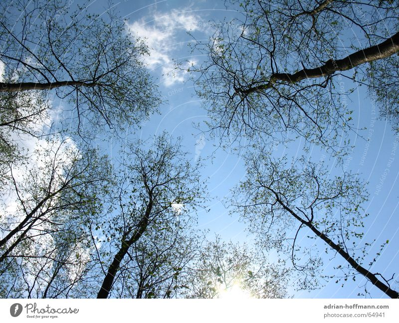 Sky Nature Blue Sun Tree Loneliness Clouds Far-off places Winter Forest Cold Environment Warmth Death Wood Freedom