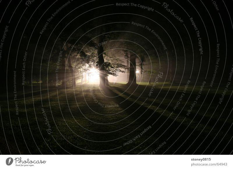 Sun Forest Dark Bright Lighting Fog Mystic