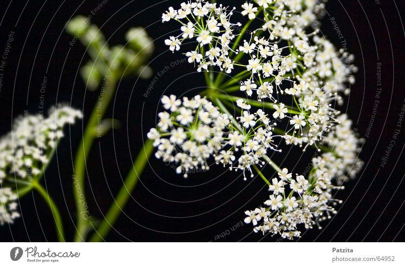 meadow flower Flower Meadow flower Grass Summer