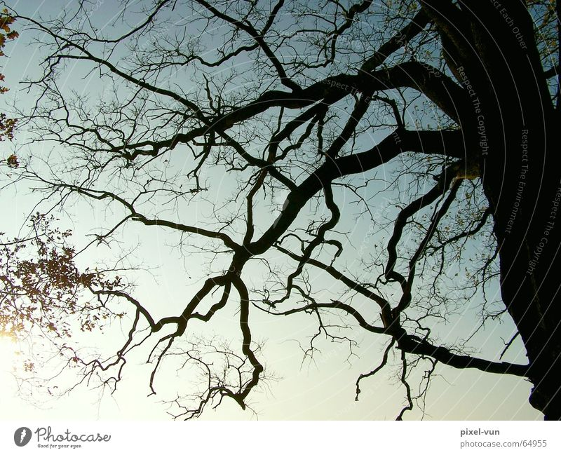 Sky Old Tree Sun Leaf Branch Tree trunk Twig Environmental protection Tree bark Branchage Oak tree Deciduous forest