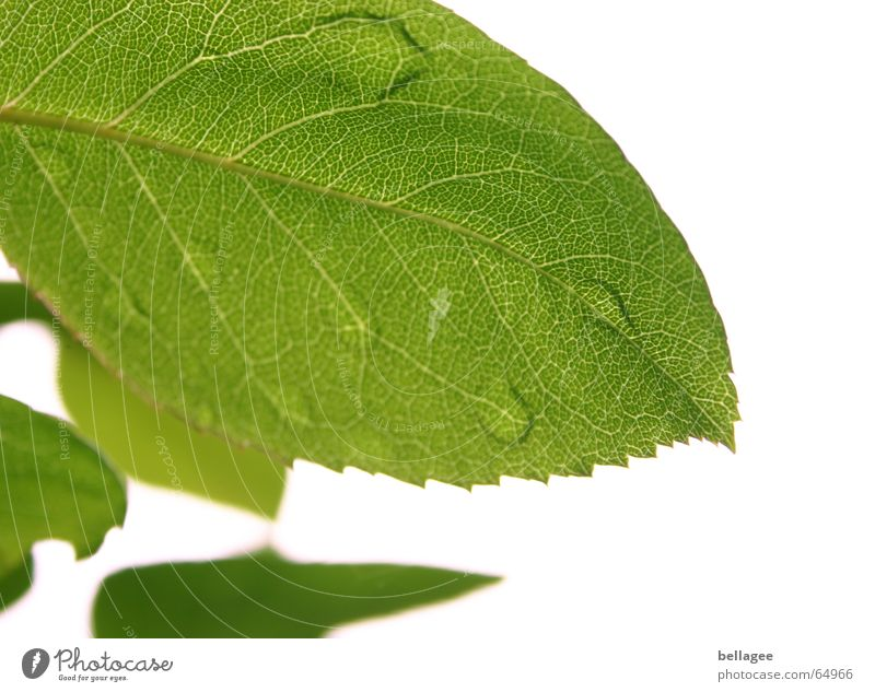when leaves weep Leaf Green White Exterior shot Tree Blur Vessel Pattern Drops of water Structures and shapes Nature