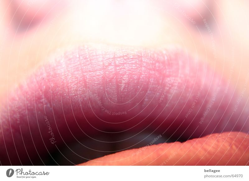 lipps Lips Above To talk Furrow Mouth half-open pink nose what does she want to say Part Teeth Tilt Partially visible