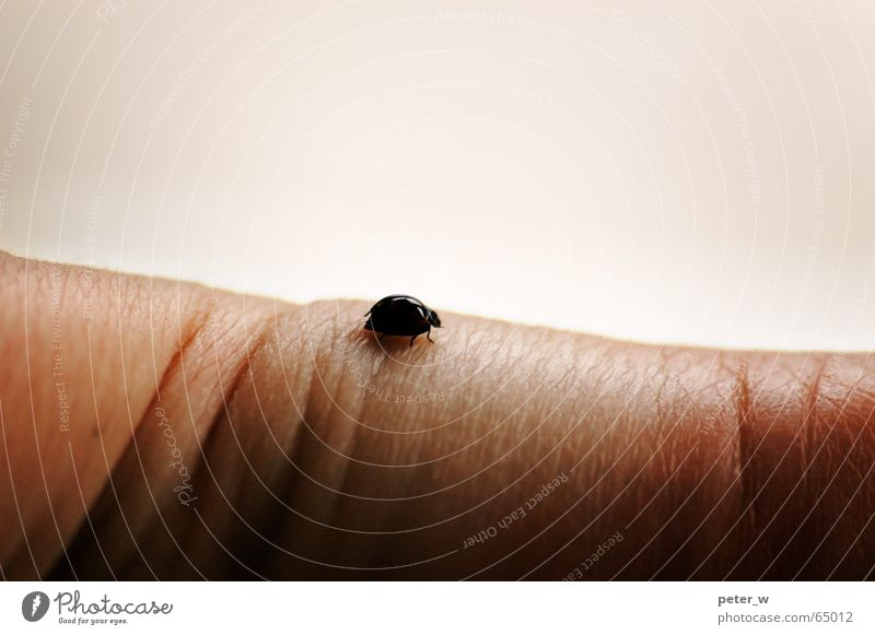 Nature Hand Loneliness Animal Happy Small Fingers Hope Exceptional Delicate Insect Wrinkles Touch Beetle Crawl Ladybird