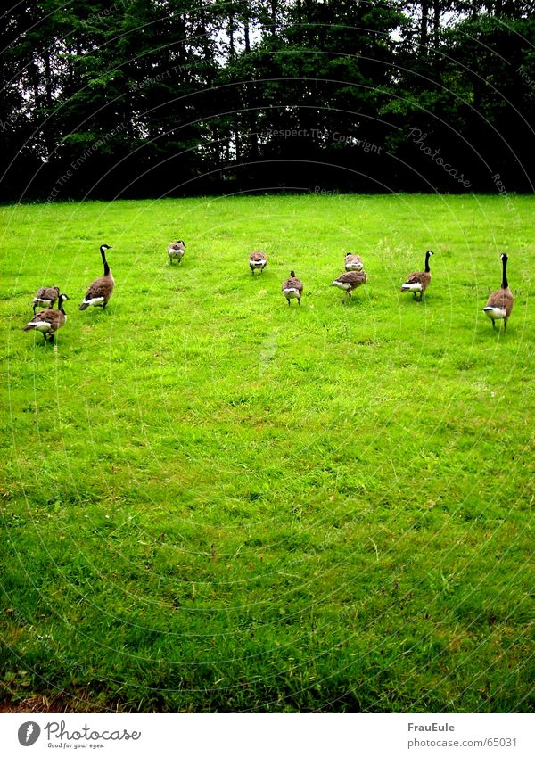 Vacation & Travel Green Tree Forest Cold Meadow Movement Grass Bird Together Rain Fear Multiple Feather Walking Nutrition