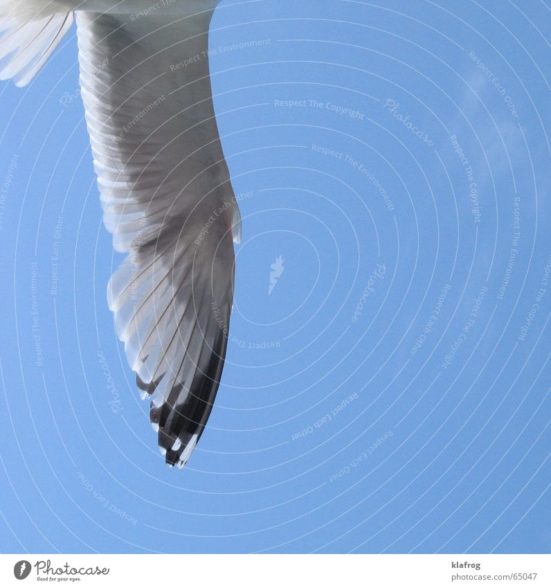 Half a seagull doesn't make a summer yet Seagull Summer Silhouette Wing Coast Vacation & Travel Ocean Sky Bird Free Freedom Wind Profile Flying Blue Feather