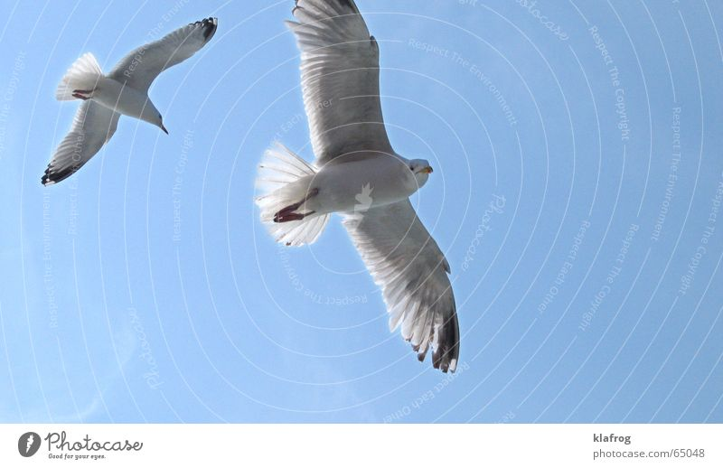 Sky Blue Vacation & Travel Summer Ocean Coast Freedom Bird Wind Flying Pair of animals In pairs Feather Wing Curiosity
