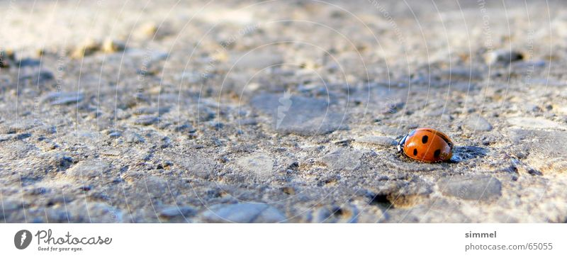 Lonely Happiness II Ladybird Loneliness Uniqueness Red Punctual Middle Insect Good luck charm Symbols and metaphors Small Vulnerable Fleeting Happy Exclusion