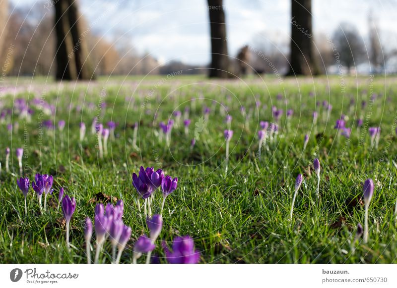 spring wide. Well-being Contentment Relaxation Calm Sky Sun Spring Plant Tree Flower Grass Blossom Crocus Garden Park Meadow Blossoming Fragrance Discover