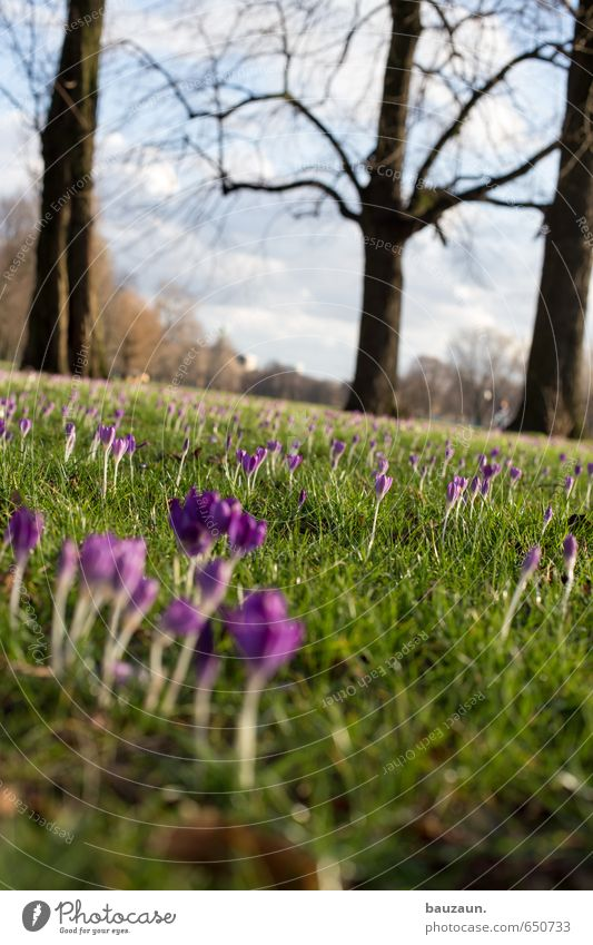 spring weird. Well-being Contentment Relaxation Trip Far-off places Freedom Garden Sky Climate Beautiful weather Plant Tree Grass Blossom Crocus Park Meadow
