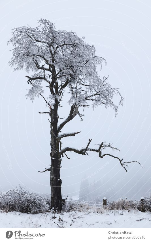 Asymmetrical tree Plant Winter Bad weather Fog Ice Frost Tree Garden Fruit garden Wood Fence Prickly bush Gray Subdued colour Exterior shot Deserted