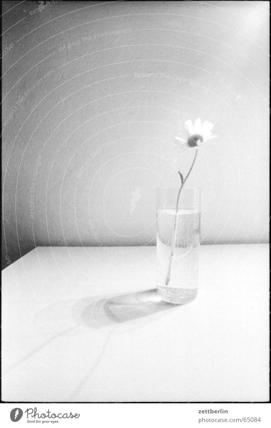 Flower Loneliness Think Concentrate Lust Vase Flower vase