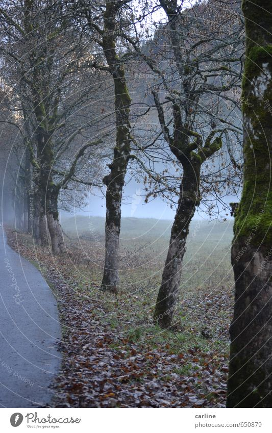 Nature Plant Tree Loneliness Landscape Cold Forest Mountain Meadow Autumn Death Wood Fear Weather Fog Transience