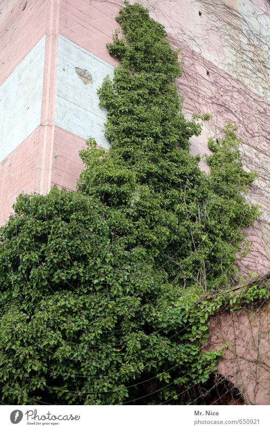 inexplicable Environment Plant Ivy High-rise Facade Growth Green Building Flak tower Gloomy Insulation Foliage plant Evergreen plants Bushes Leaf green stuff