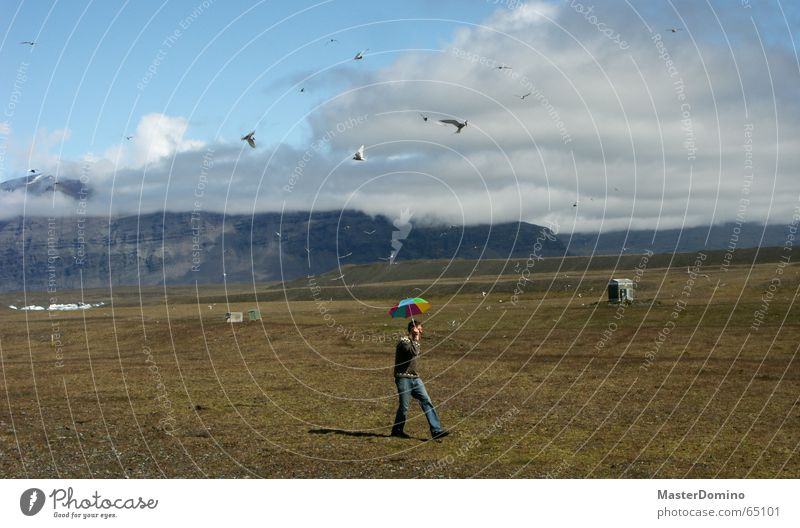 birds vs. umbrella Bird Hiking Going To go for a walk Meadow Green Clouds Attack Multicoloured Seagull Iceland Umbrella Flying Nature Landscape Mountain Sky