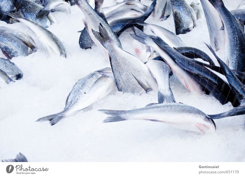 Blue Summer Food Ice Fresh Fish Markets Cooling