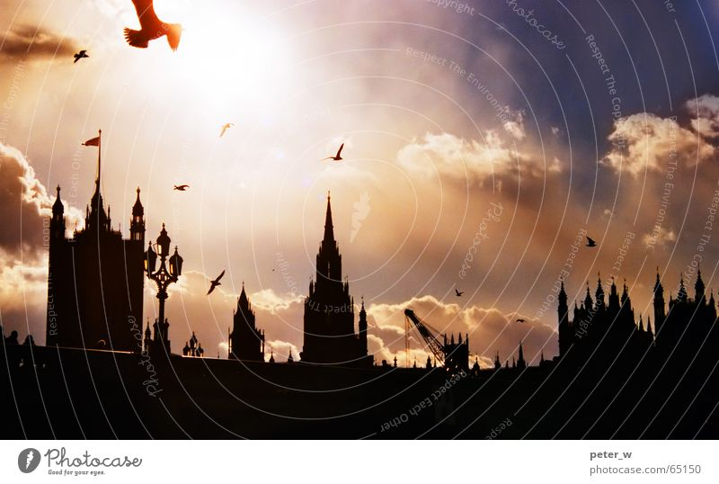 London Bird Sky Clouds Town Bridge Vacation & Travel Great Britain Europe Romance Building Sunrise Sunset Capital city Big Ben Silhouette Symbols and metaphors