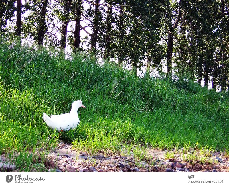 Nature Water White Green Tree Animal Forest Meadow Nutrition Food Grass Freedom Coast Happy Bright Living thing