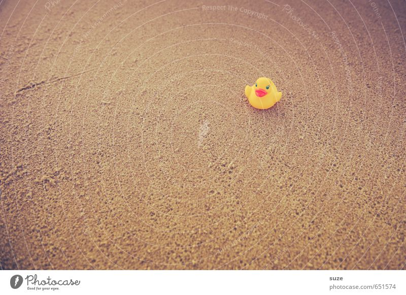 Not far Lifestyle Joy Swimming & Bathing Leisure and hobbies Playing Vacation & Travel Trip Summer Summer vacation Beach Infancy Sand Toys Squeak duck Small