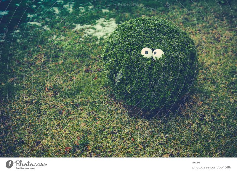 There's something in the bush. Lifestyle Style Joy Garden Eyes Environment Nature Plant Bushes Meadow Observe Growth Small Funny Sustainability Curiosity Cute