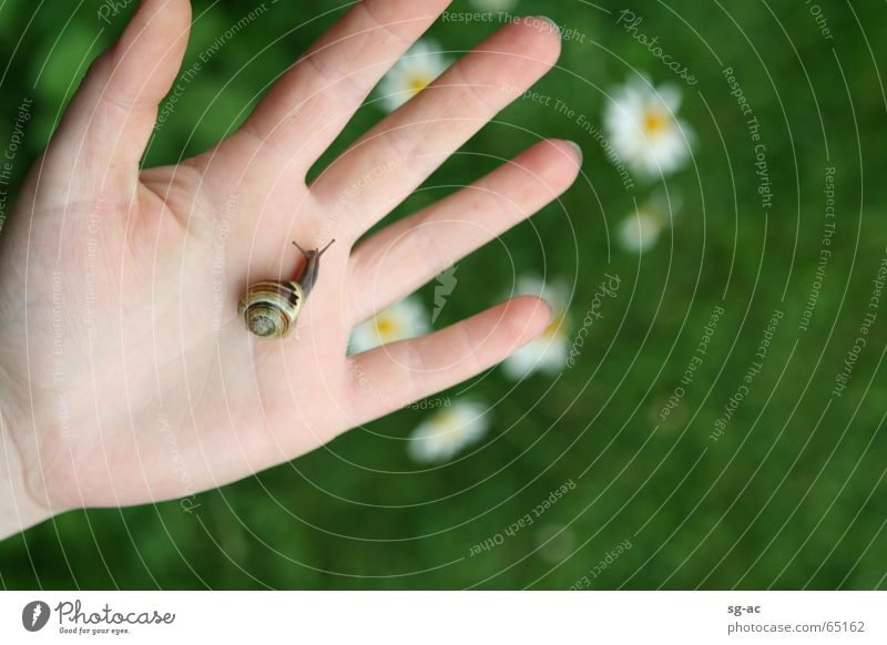 close contact Animal Daisy Hand Fingers Feeler Snail shell Reptiles Hybrid Nature Near Contact magarites critter crawler escargot slug home feel palp