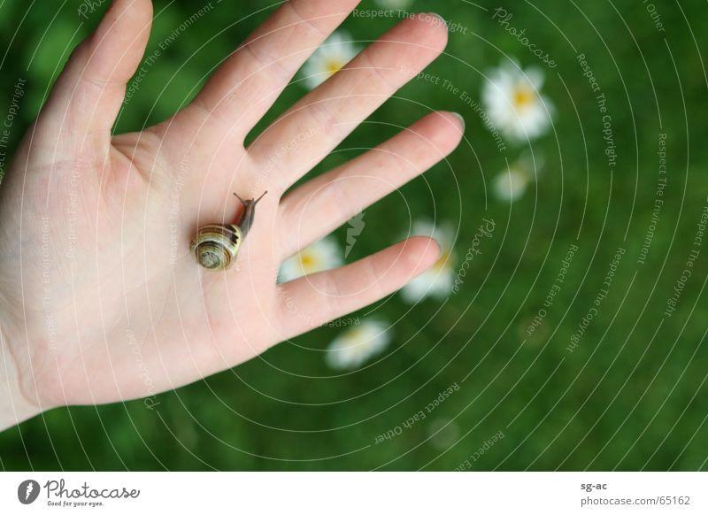 Nature Hand Animal Fingers Near Contact Daisy Snail Feeler Reptiles Hybrid Snail shell