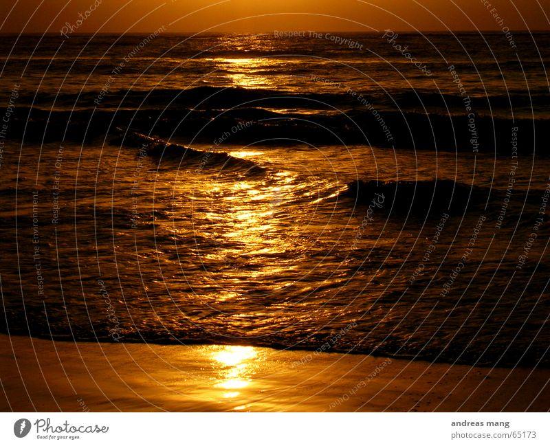 Water Beautiful Sun Ocean Beach Calm Far-off places Waves Gold Comforting