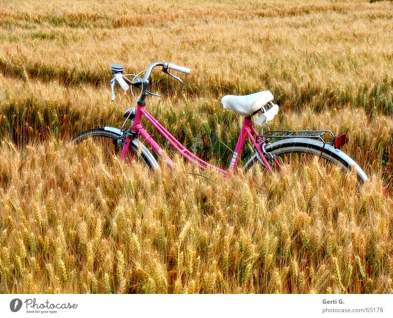 White Vacation & Travel Relaxation Bicycle Field Pink Trip Break Stop Grain Agriculture Parking Cornfield Tire Wheat Skid marks