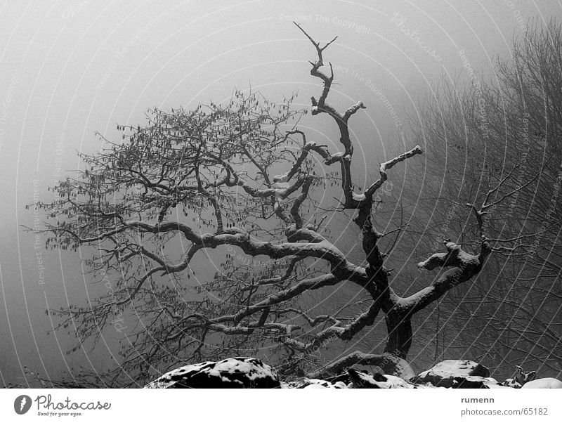 old tree Winter fog cold freez&#1077 bonzay solitude bulgaria mountain alone tree in cold fog outdoor shooting