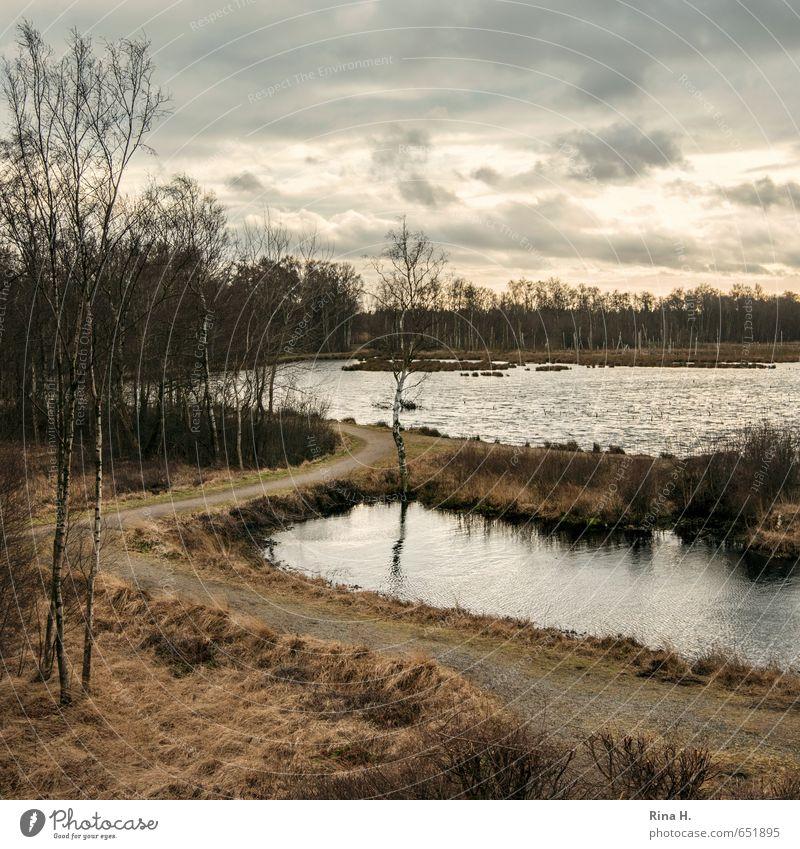 Nature Plant Tree Landscape Clouds Winter Dark Environment Sadness Grass Lake Moody Gloomy Bushes Square Dramatic