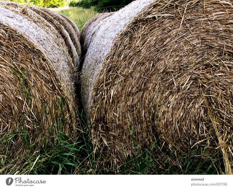 Nature Round Dry Straw Dried Pressed