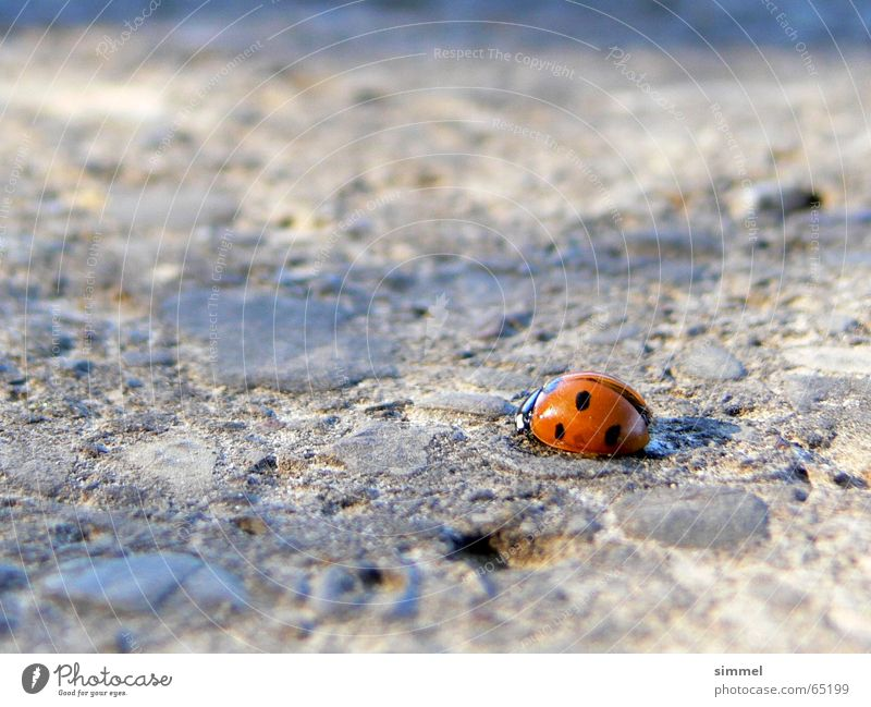Lonely Happiness III Ladybird Loneliness Symbols and metaphors Good luck charm Asphalt Punctual Insect Vulnerable Happy Street