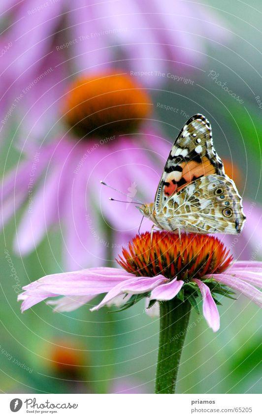 Flower Wing Butterfly Feeler