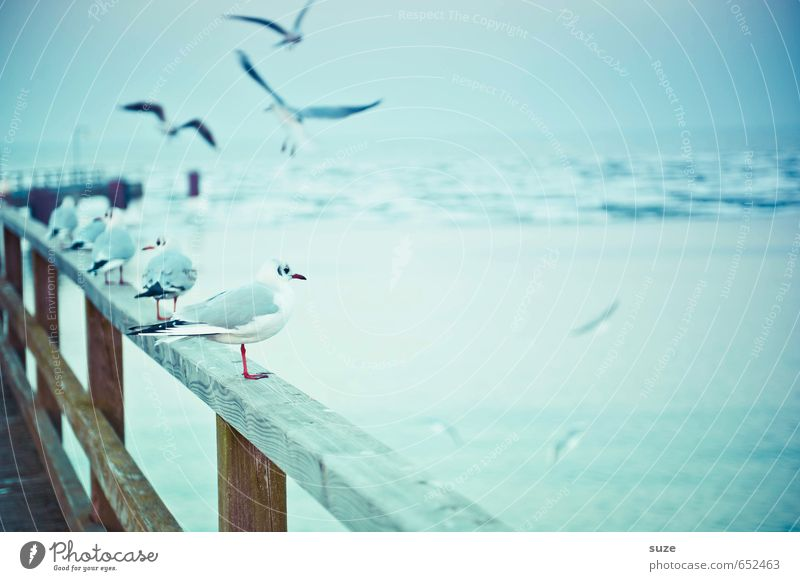 Sky Nature Blue Ocean Animal Cold Environment Small Wood Horizon Air Bird Ice Flying Wild animal Wait