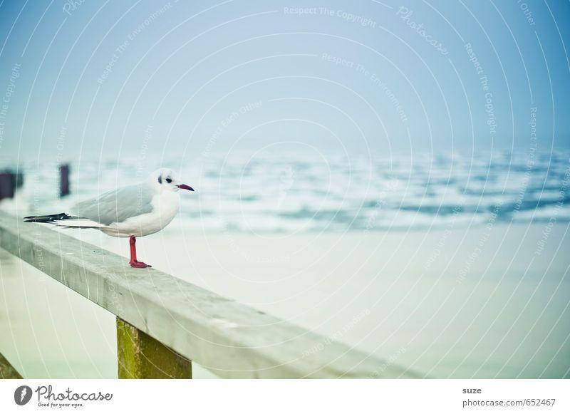 Sky Nature Blue White Ocean Calm Animal Winter Cold Environment Coast Funny Small Wood Horizon Bird