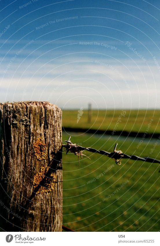 beautiful to look at. East Frisland Meadow Grass Summer Barbed wire Fence