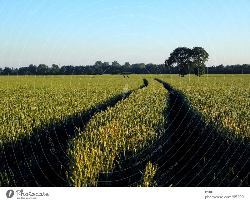 This way Horizon Far-off places Tree Green Infinity Deep Lanes & trails Grain Blue Tracks Freedom Sky Wind energy plant Americas Landscape Nature
