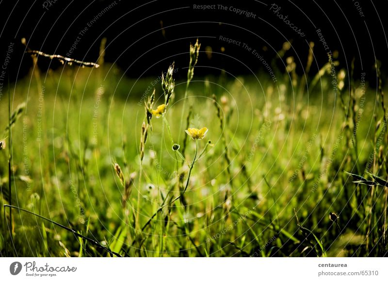 Flower Summer Relaxation Meadow Grass Lake Earth Lie Insect