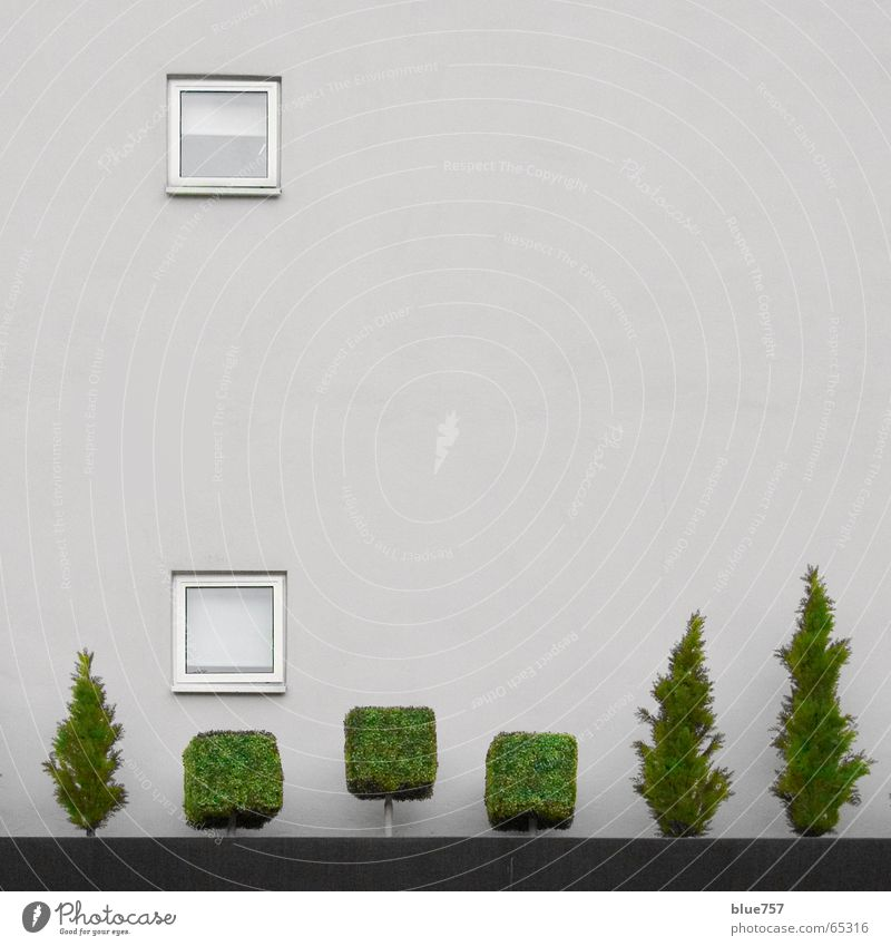 Treescape 2 Concrete Window Wall (building) Gray Green White Treetop beautiful view a place in the green dream of the tree grey Town tree line room with a view