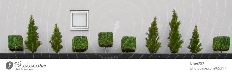 White Tree Green City Wall (building) Window Gray Wall (barrier) Concrete Treetop Plant