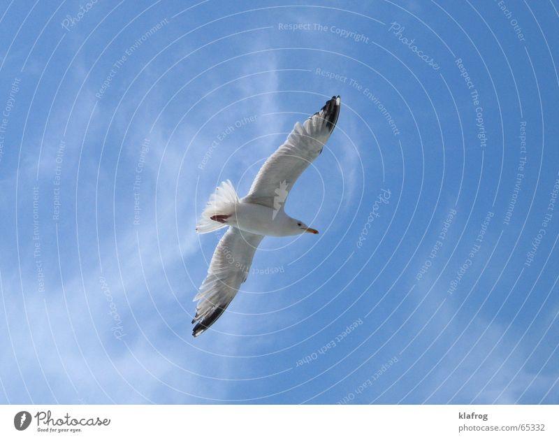 Beautiful Sky Ocean Blue Summer Vacation & Travel Freedom Bird Coast Wind Flying Feather Wing Curiosity Seagull